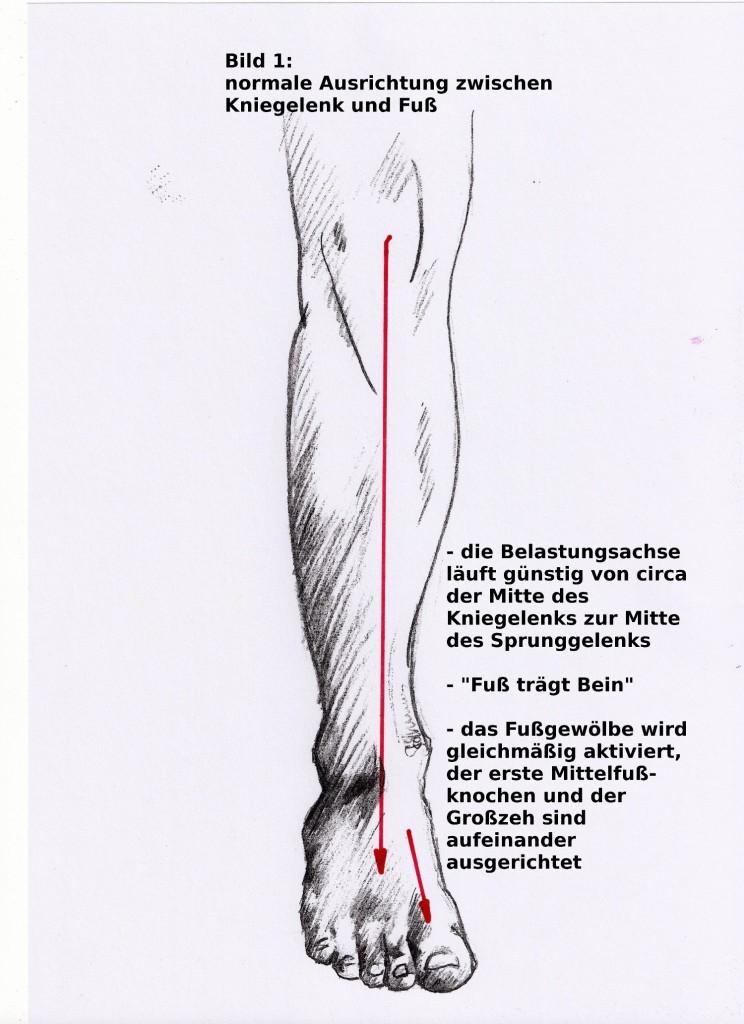 Bein physiologisch