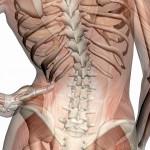 Rückenschmerzen und Gelenkschmerzen durch Fehlhaltung