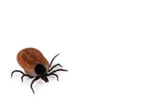 Insektenschutz: vor Zecken schützen