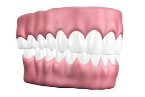 Okklusion - Kontakt der Zähne des Oberkeifers und des Unterkiefers