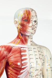 chinesische Medizin: Meridiane, Nerven, Gefäße, Faszien, Muskeln, Knochen