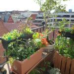 Heilkräuter und Wildpflanzen in Bremen