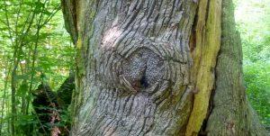 Ein starker Baum - Lebenskrise als Chance
