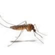 Natürlicher Schutz vor Insekten